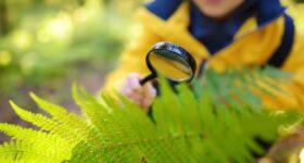 Proyecto Men Vs Nature En Escuela Montessori